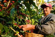 Zijn koffiebonen het goud van de toekomst?