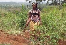 Kameroen blaast kwakkelende koffie-industrie nieuw leven in