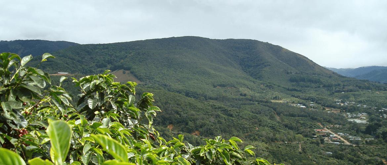 Costa-Rica-Coope-Tarrazu-koffie