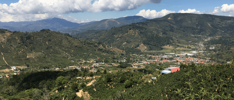 Costa-Rica-Coope-Tarrazu-koffieplantage
