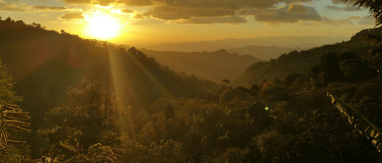 Ethiopie Yirgacheffe koffieplantage