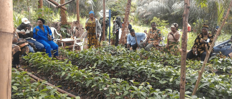 Kameroen-koffie-ontwikkelingsproject-koffieboeren