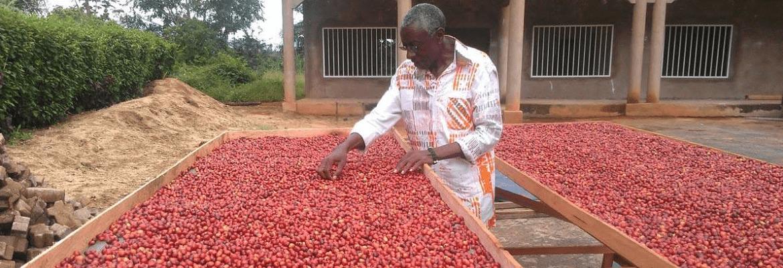 Kameroen-koffie-ontwikkelingsproject